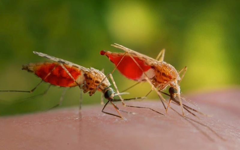 How-Many-Mosquito-Bites