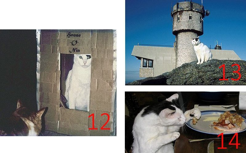 Cats of Mount Washington