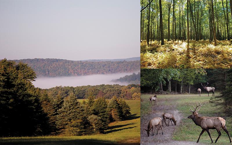 pennsylvania wild elk