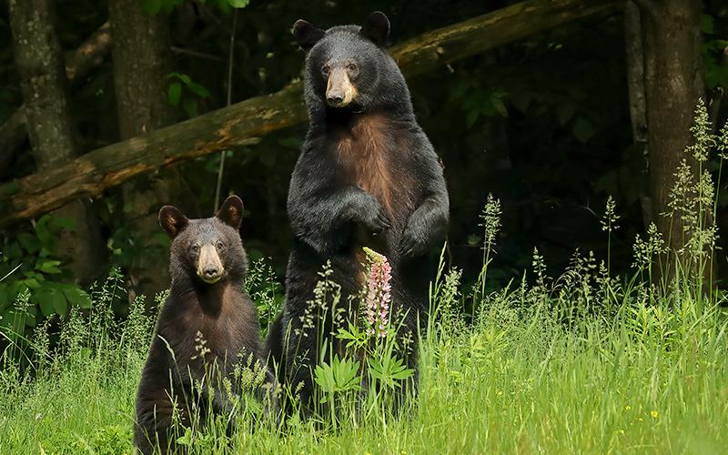 Best Bear Boxes