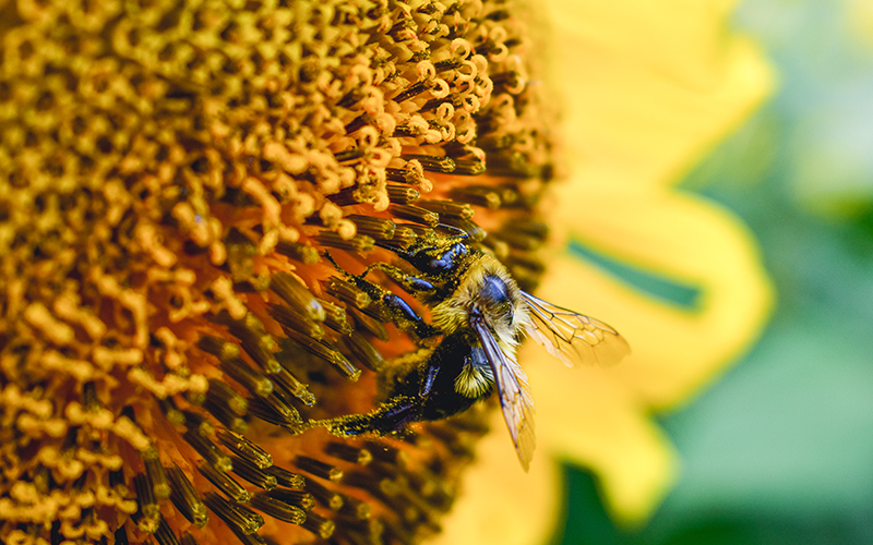 How Bees and Birds Keep Our Ecosystem Strong