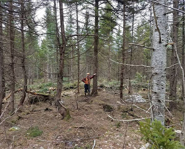 AMC Conservation team in Maine's North Woods