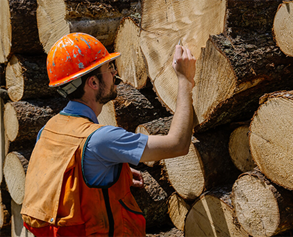 AMC's Conservation team inspects tree growth