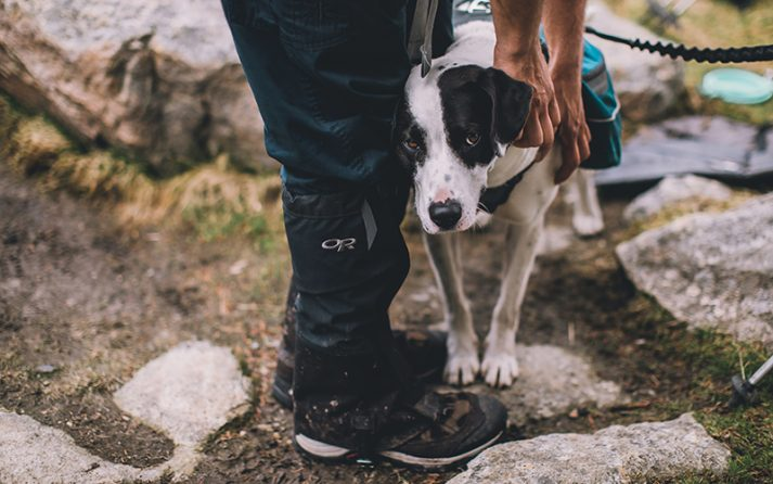 Pets can enhance our experience of the outdoors, but they must always remain near us and under our control.
