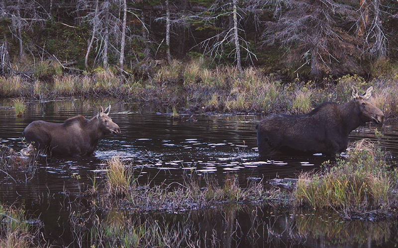 Approaching wildlife in the backcountry can put you and the animal in harm's way.