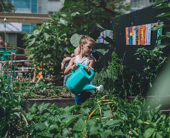 Anita's Garden, Chelsea, Massachusetts